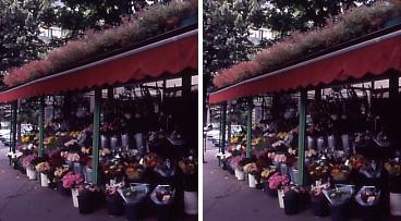 パリ・花屋.jpg